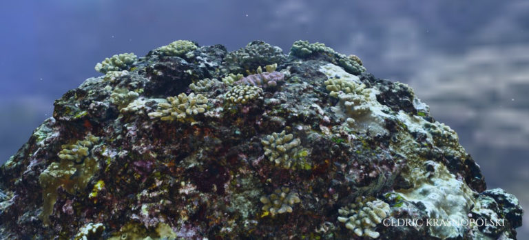 Coral reef (photogrammetry) - for Andromède-Océanologie